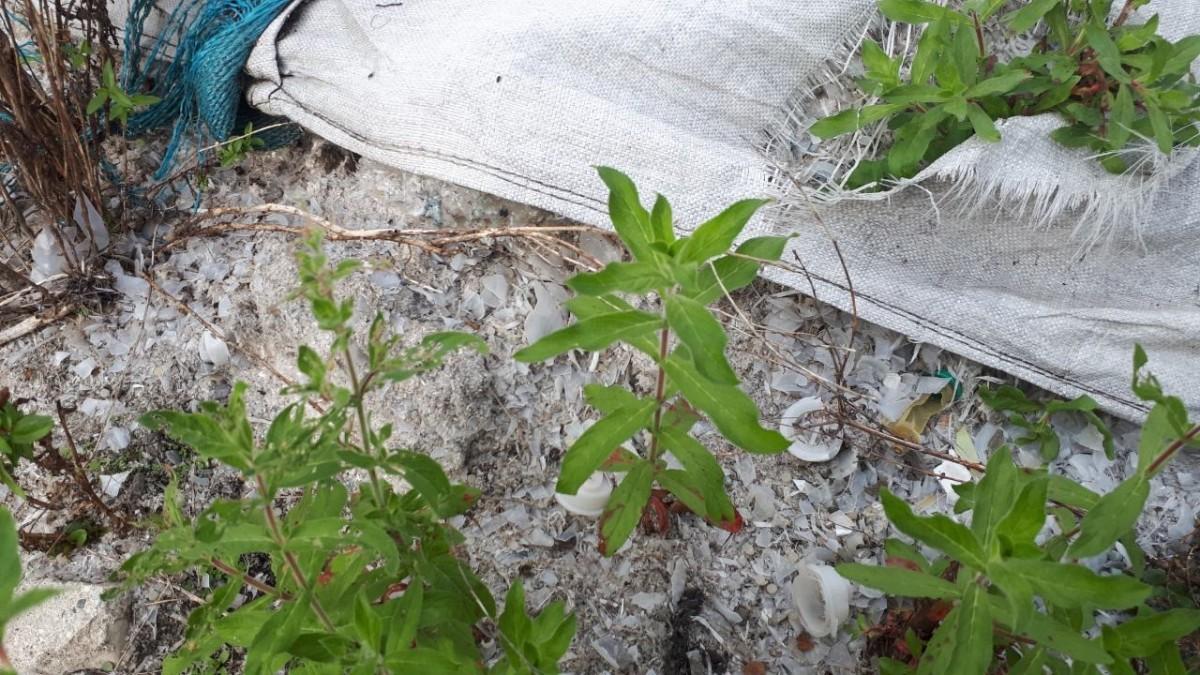 Невидимые последствия пандемии: обанкротившиеся компании оставляют тонны отходов